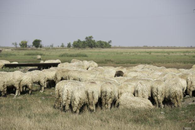 <em>Hír szerkesztése</em> Tóth Csaba: a mezőgazdasági összeírás nem ellenőrzés [AUDIO]