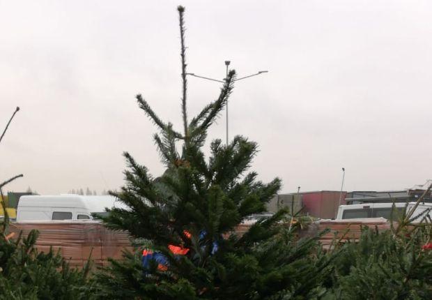 <em>Hír szerkesztése</em> Megkezdték a kidobott karácsonyfák összegyűjtését
