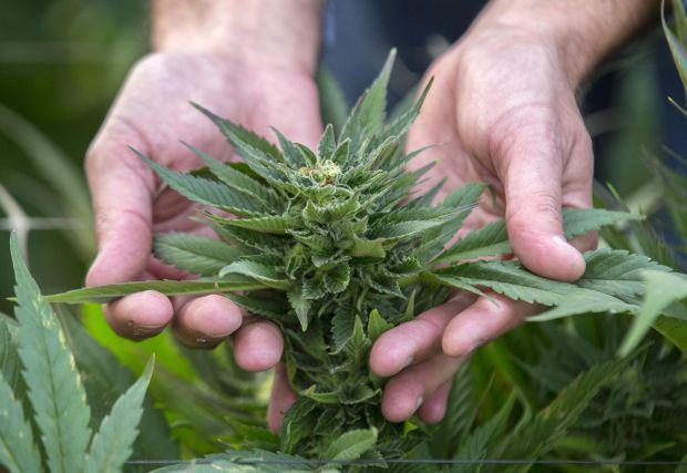 <em>Hír szerkesztése</em> A szenátus elfogadta a marihuána orvosi célú használatáról szóló törvénytervezetet
