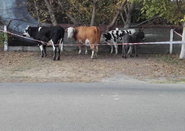 <em>Hír szerkesztése</em> Szabadon kószáló állatokat fogtak be a központban