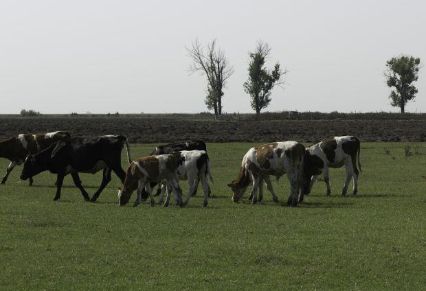 <em>Hír szerkesztése</em> Megkezdődött a mezőgazdasági összeírás