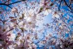 <em>Hír szerkesztése</em> Szép időnk lesz húsvétkor