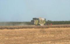 <em>Hír szerkesztése</em> A sertéspestis miatt nehéz a kukorica értékesítése [AUDIÓ]