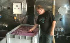 <em>Hír szerkesztése</em> Jó évjárat az idei – vélik a hegyaljai bortermelők [AUDIÓ]