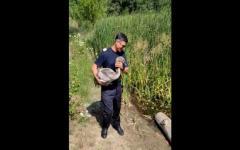 <em>Hír szerkesztése</em> Horgászzsinórba gabalyodott hattyút mentettek meg a tűzoltók