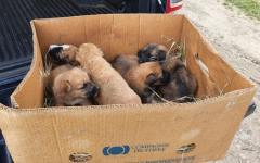 <em>Hír szerkesztése</em> Kiskutyákat mentett meg az állatrendőrség