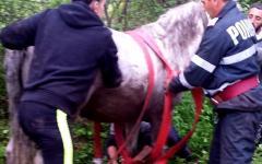 <em>Hír szerkesztése</em> Kútba esett lovat mentettek ki a tűzoltók