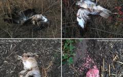 <em>Hír szerkesztése</em> Még nincs felelőse a vadállat-mérgezéseknek