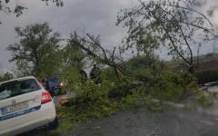<em>Hír szerkesztése</em> Fákat csavart ki a vihar Arad megyében