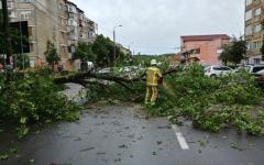 <em>Hír szerkesztése</em> Fákat döntött ki a vihar Aradon