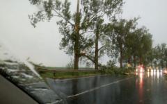 <em>Hír szerkesztése</em> Életveszélyesek az út menti fák Nagyzerénd határában